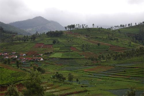 Teplantage i Nilgirisbergen
